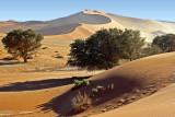 Namib-Naukluft Dunes