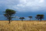 Serengeti Before Rain