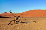 Stump in Desert