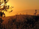 Toscana Morning