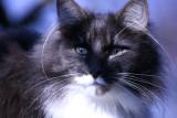 Portrait of Amadeus