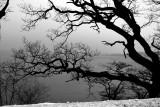 Esrum Lake