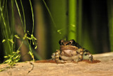 Small frog outside our hut