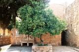 Madaba Mosaic School