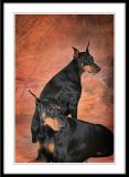 Doberman Pinscher Club of the Tappan Zee