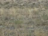 The standard vegetation on the steppe.  Something here for those sheep