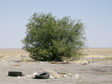 Back on steppe and first tree for more than 100 miles