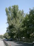 Tree-lined street behind Dostyk Avenue