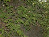 I think these are Elm leaves, so long since they were common in Britain