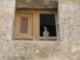 New inhabitants of abandoned buildings in Hontanas