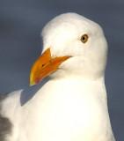 sea_gulls