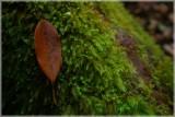 Forêt de Mare Longue
