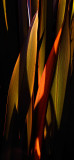 orange palm frond amongst green_MG_9908.jpg