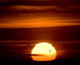 Flying into the setting sun_MG_6062.jpg