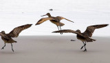 Bird Ballet _MG_6990.jpg