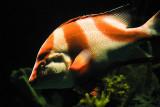 Orange Fish 2794.jpg