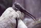 Mystery bird in black and white 0166.jpg