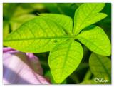 Leaf_water drop.jpg