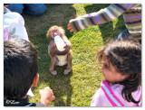 Pet show1.jpg