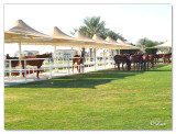 Polo & Equestrian club Dubai1.jpg