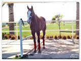 Polo & Equestrian club Dubai2.jpg