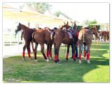 Polo & Equestrian club Dubai3.jpg