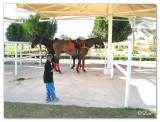 Polo & Equestrian club Dubai4.jpg