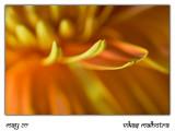 Flower 83