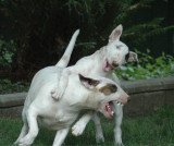 Sisters-playin