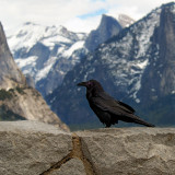 Yosemite 2007-03-07_024.jpg