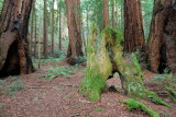 Muir Woods 2007-03-06_011.jpg