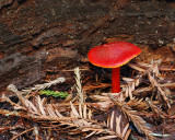 Muir Woods 2007-03-06_035.jpg