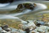 Muir Woods 2007-03-06_046.jpg