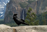 Yosemite 2007-03-07_025.jpg
