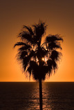 Sunset In The Palm