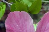 It Rains Everyday on Saipan