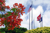 Flame Tree and Flags