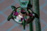 Ruby-throated Hummingbirds- 2007