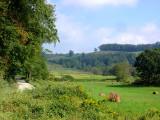Meadow near Boone