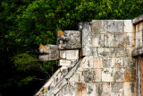 Eagles and Jaguars