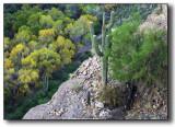 Superstitions - Topless Saguaro Cactus
