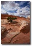 Images Spring 2007 (Paria Plateau, Northern AZ)