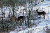 ...and see a herd of at least 12 deer!