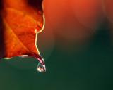 4225-Rainy Leaves-2.jpg