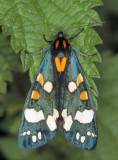 4415-Moth-1.jpg