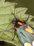 4422-Moth-2.jpg