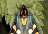 4428-Moth-3.jpg