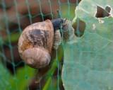 4458-cheeky snail-1.jpg