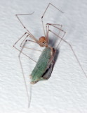 4495-Scary Spider-1.jpg