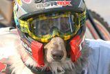 IMG_1830 dogs.jpg